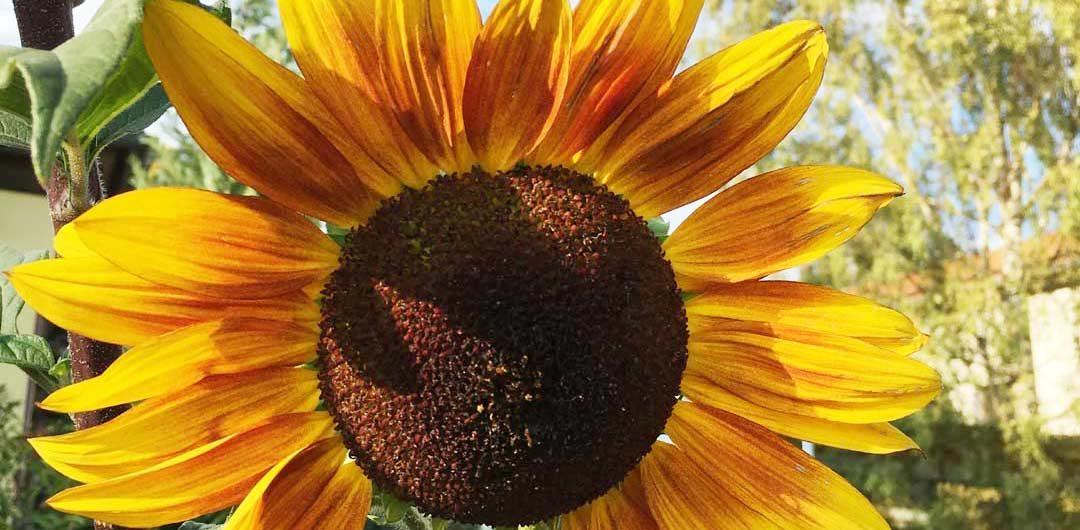 Was ist denn ein Ökosattva? – Nachlese zum Ökosattva-Treffen am 14.11.